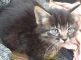 Кошки, котята Неизвестная порода, цена 20 Грн., Фото