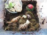 Животные Экзотические животные, цена 40 Грн., Фото