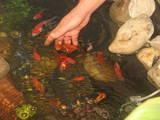 Рыбки, аквариумы Водные растения, цена 300 Грн., Фото