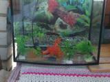 Рыбки, аквариумы Аквариумы и оборудование, цена 350 Грн., Фото