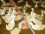 Папуги й птахи Корм, ціна 6 Грн., Фото