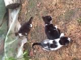Кішки, кошенята Різне, Фото