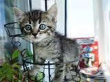 Кішки, кошенята Безпорідна, Фото