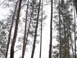 Дома, хозяйства Днепропетровская область, цена 211000 Грн., Фото