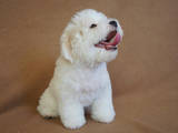 Собаки, щенки Бишон фрисе, цена 4800 Грн., Фото