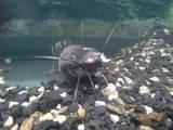 Рибки, акваріуми Акваріуми і устаткування, ціна 5200 Грн., Фото