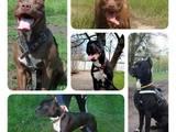Собаки, щенята Невідома порода, ціна 3000 Грн., Фото
