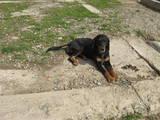 Собаки, щенки Разное, цена 2600 Грн., Фото
