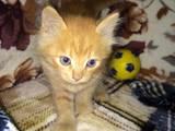 Кошки, котята Беспородная, цена 0.10 Грн., Фото