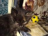 Кошки, котята Неизвестная порода, цена 0.10 Грн., Фото
