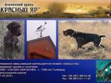 Собаки, щенки Немецкая жесткошерстная легавая, цена 6200 Грн., Фото