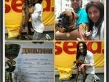 Собаки, щенята Боксер, ціна 5500 Грн., Фото