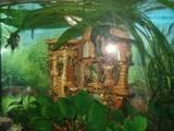 Рибки, акваріуми Акваріуми і устаткування, ціна 1400 Грн., Фото