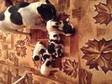 Собаки, щенята Французький бульдог, ціна 2500 Грн., Фото