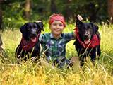 Собаки, щенята Лабрадор ретрівер, ціна 7000 Грн., Фото