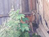 Тварини Екзотичні тварини, ціна 400 Грн., Фото