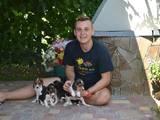 Собаки, щенки Эстонская гончая, цена 50 Грн., Фото