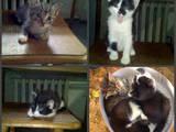 Кошки, котята Беспородная, цена 5 Грн., Фото