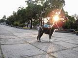 Собаки, щенки Акита-ину, цена 16000 Грн., Фото