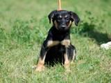 Собаки, щенки Неизвестная порода, цена 5 Грн., Фото