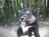 Собаки, щенки Разное, цена 800 Грн., Фото