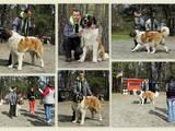 Собаки, щенки Московская сторожевая, цена 4500 Грн., Фото