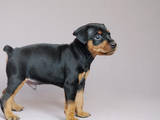 Собаки, щенята Карликовий пінчер, ціна 4000 Грн., Фото