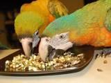 Папуги й птахи Корм, ціна 4 Грн., Фото