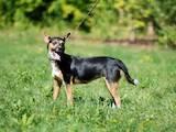 Собаки, щенята Невідома порода, ціна 5 Грн., Фото