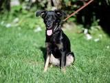 Собаки, щенки Беспородная, цена 5 Грн., Фото