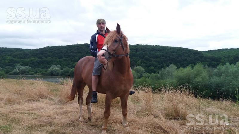 Кінь фото 8