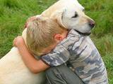 Собаки, щенята Корм, ціна 170 Грн., Фото