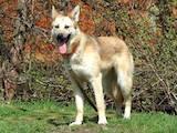 Собаки, щенята Безпорідна, ціна 11 Грн., Фото