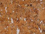 Стройматериалы Обои, цена 240 Грн., Фото