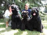Собаки, щенки Черный терьер, цена 5500 Грн., Фото