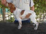 Собаки, щенки Неизвестная порода, цена 10000 Грн., Фото