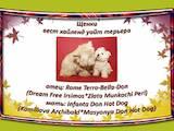 Собаки, щенки Вестхайленд уайт терьер, цена 12000 Грн., Фото