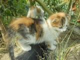 Кішки, кошенята Невідома порода, ціна 100 Грн., Фото