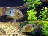 Рыбки, аквариумы Рыбки, цена 12 Грн., Фото