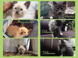 Кішки, кошенята Різне, ціна 7 Грн., Фото