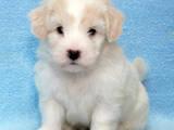 Собаки, щенки Неизвестная порода, цена 5500 Грн., Фото