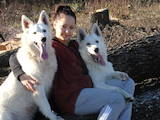 Собаки, щенки Белая Швейцарская овчарка, цена 12000 Грн., Фото