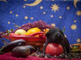 Собаки, щенки Черный терьер, цена 10000 Грн., Фото