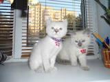 Кошки, котята Невская маскарадная, цена 1500 Грн., Фото