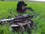 Собаки, щенята Сетер-гордон, ціна 3000 Грн., Фото