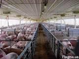 Животные Разное, цена 10 Грн., Фото
