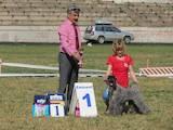 Собаки, щенята Керріблю тер'єр, ціна 12000 Грн., Фото
