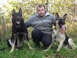 Собаки, щенята Східно-Європейська вівчарка, ціна 6500 Грн., Фото