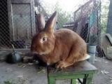 Грызуны Кролики, Фото