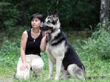 Собаки, щенки Восточно-Европейская овчарка, цена 16000 Грн., Фото